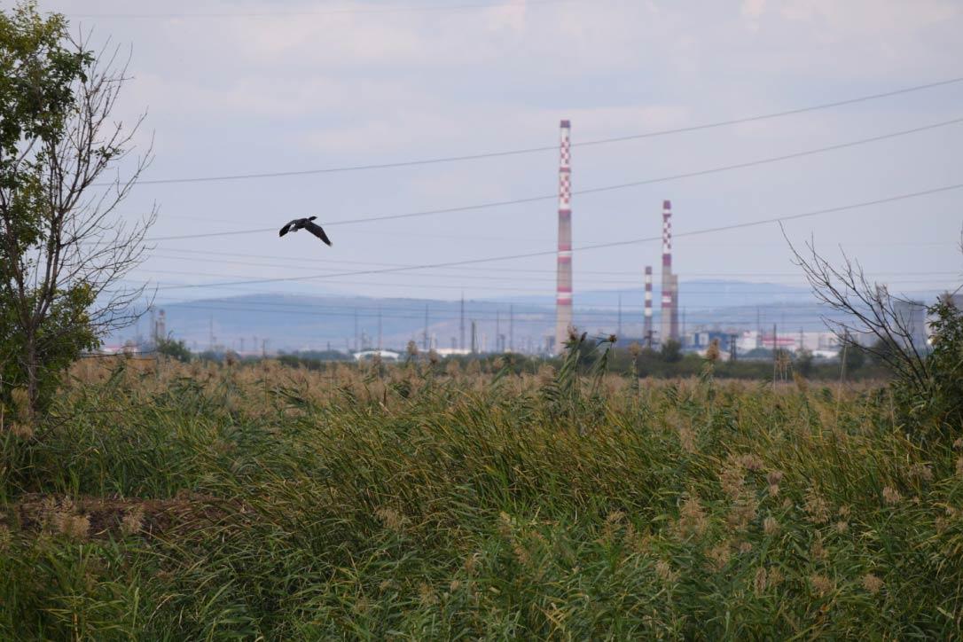 Какво е решението на замърсяването на въздуха?