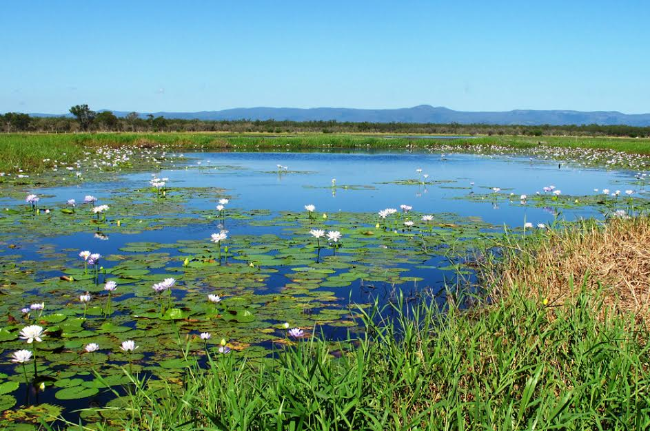 Резултат с изображение за Конвенция за защита на влажните зони.